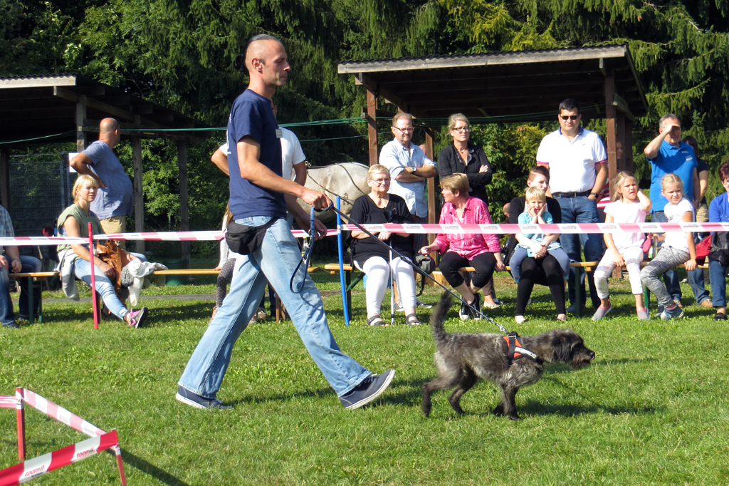 Tierheim Sommerfest am 1213 September 2015  Tierhei