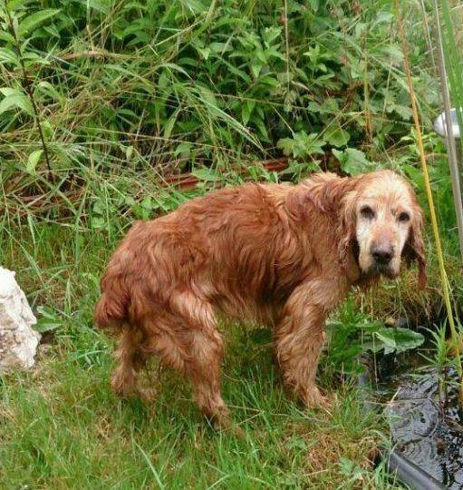Hund Neuses Am Brand Sonnefeld Tierheim