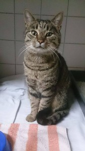 Fundkater301215