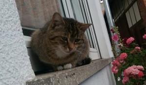 Katze Anne vermisst
