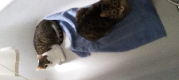 Susi und Cleo 24.10.16