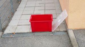 Kater in Box ausgesetzt